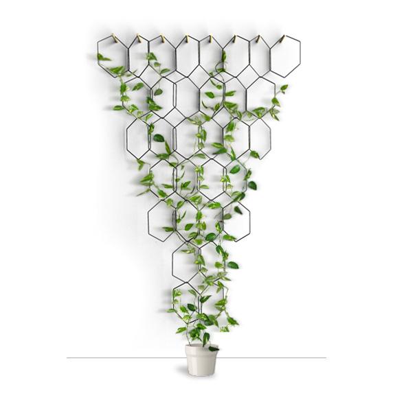 hexa-2-bis